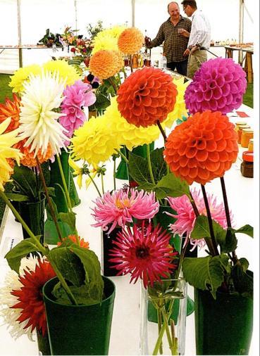 Tysoe Flower Show2