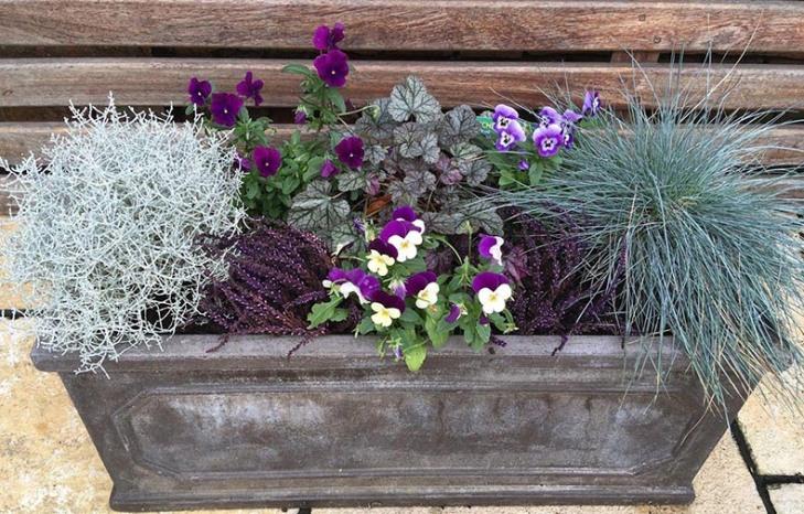 Winter-spring-planter-2