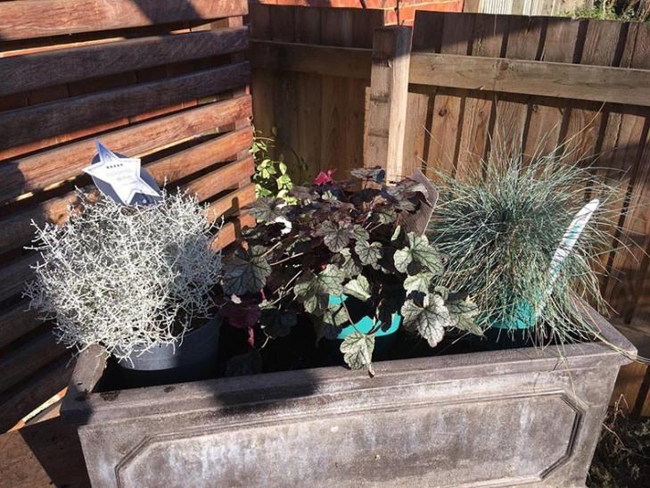 Winter-spring-planter